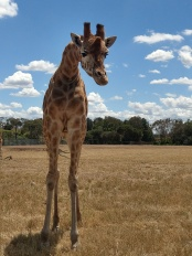 werribee zoo