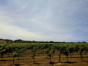 vineyards in red hill